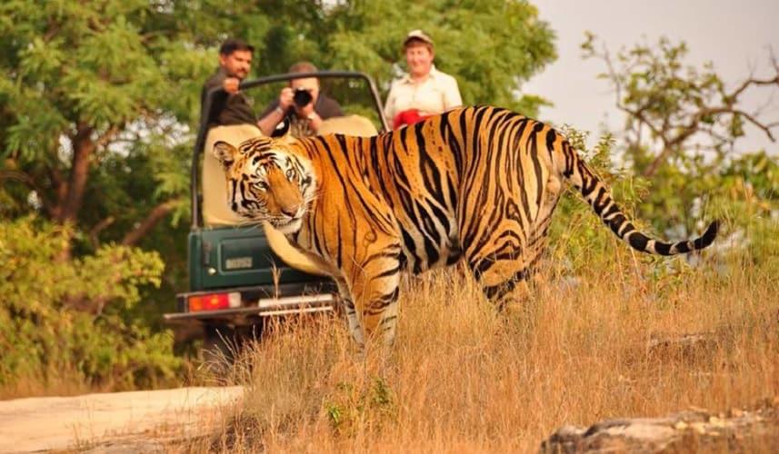 Kanha Bandhavgarh Honeymoon Tour Package; Ex Jabalpur