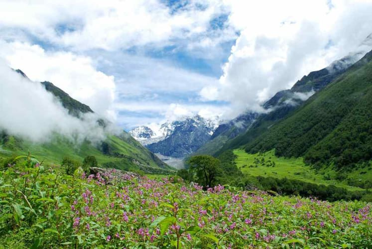 Trek your way to the Valley Of Flowers
