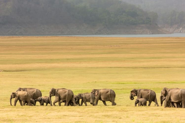 Thrilling Jungle Safari at Corbett National Park
