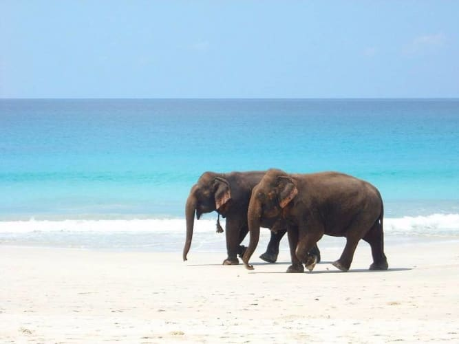 Honeymoon in Andaman Islands 5 Nights