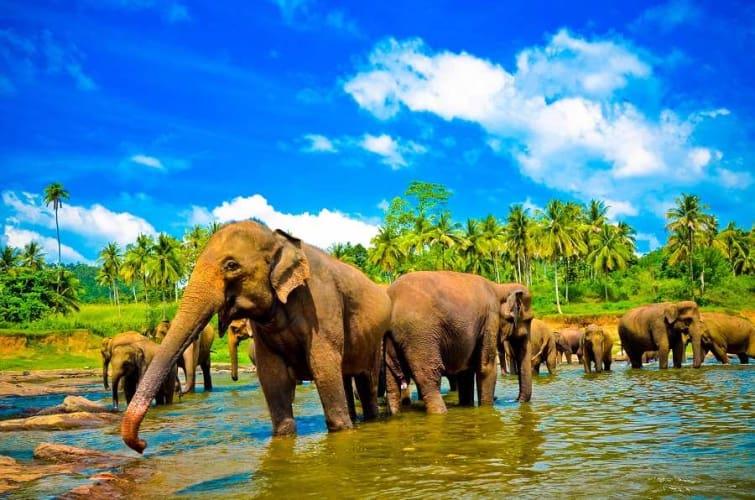 Explore Sri Lanka this 2017