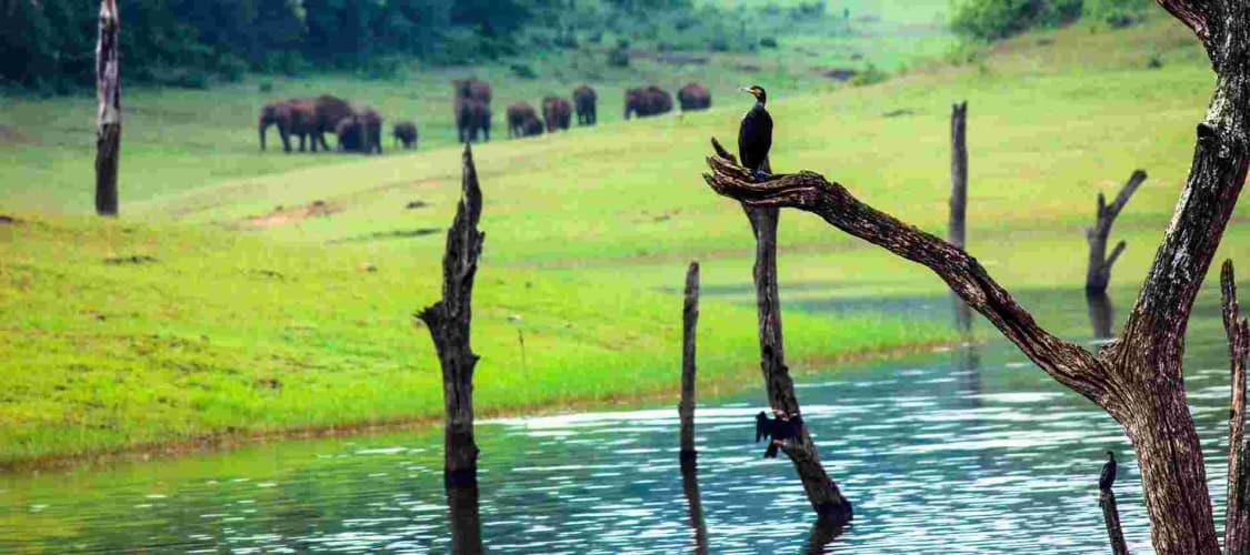 Holiday in Kerala- Always Amazes you!