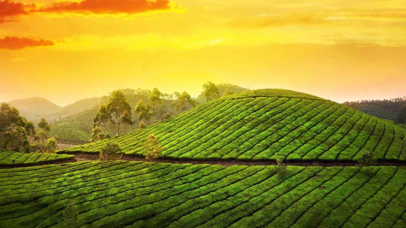 Mini Kerala Getaway; 3 Days Trip