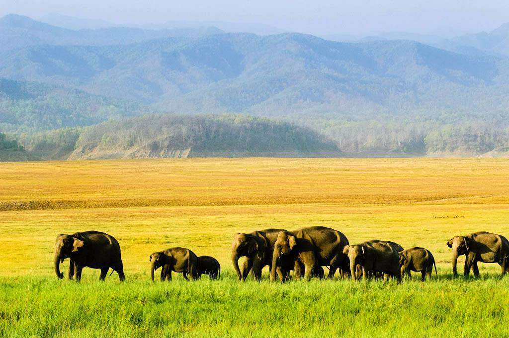 Quick Getaway to Corbett; Exclusive Gypsy for Wildlife Safari, Stay in Forest Rest House, Camping & More