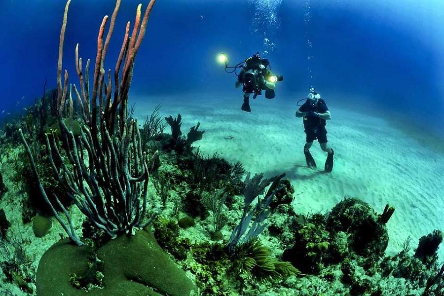 Deep diving in the Marine life of Gili Trawangan Islands