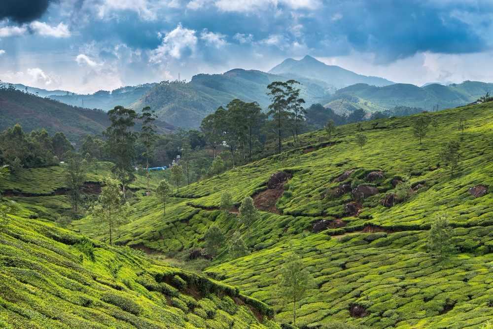 Mesmerizing Kerala; Munnar & Thekkady Getaway!