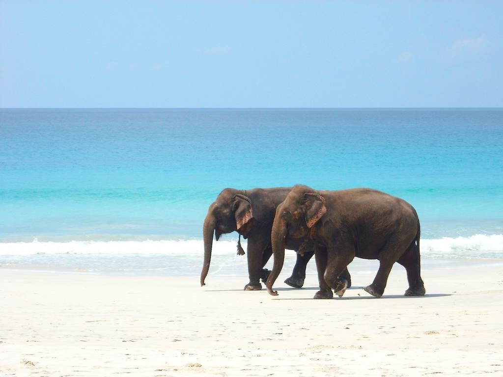 Andaman Family Holiday with Havelock Islands; Flight Ex Delhi