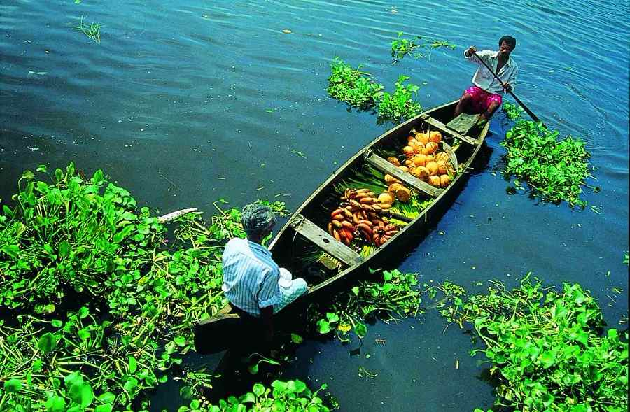 Kerala Mini Honeymoon Tour; Munnar & Alleppey Package