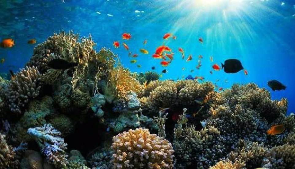 Andaman Honeymoon Holiday Package; 6 Days Trip