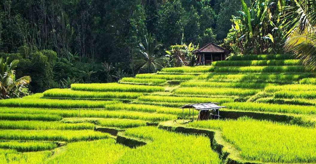 Romacing in Bali; 5 Days Honeymoon Package
