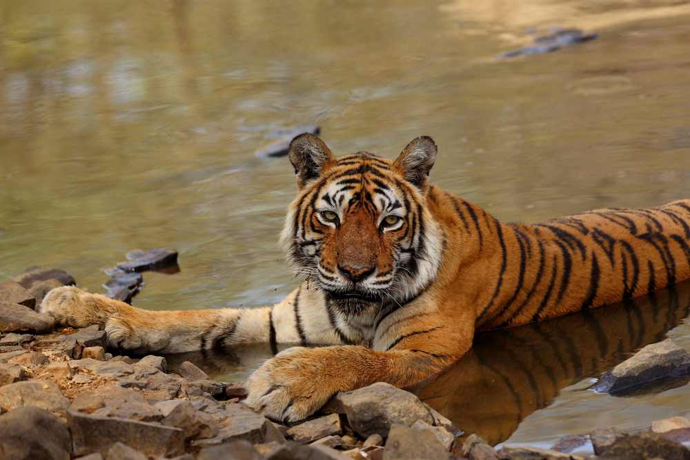 Charms of Jim Corbett; 3 Days Holiday package