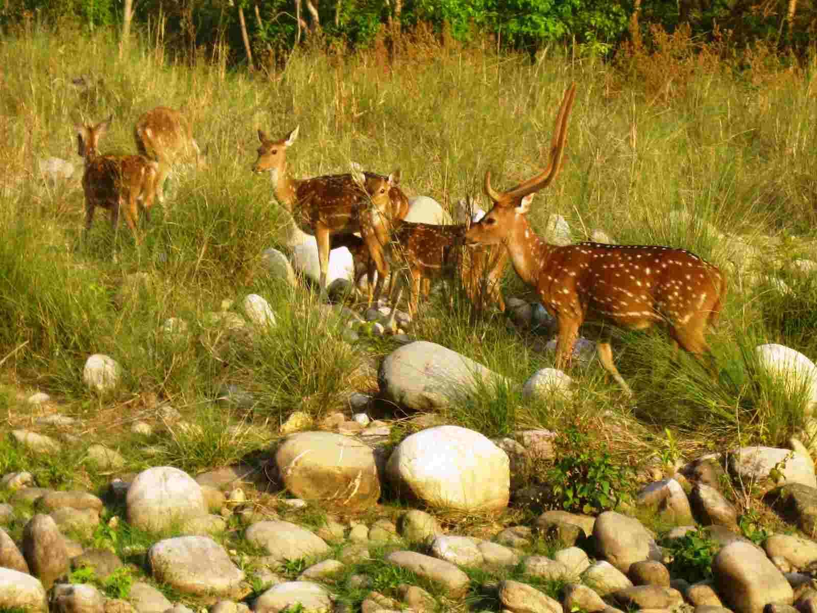 Jungle Safari at the Jim Corbett National Park