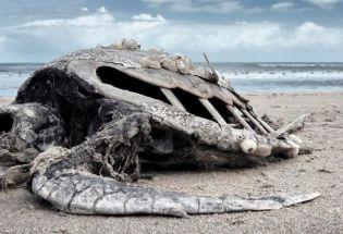 地球正在经历第六次生物大灭绝