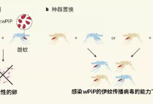 嗡嗡再见!科学家成功消灭了广州两个小岛的蚊子