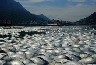 """物种灭绝:淡水鱼物种濒危–英国欧洲现状堪忧与中国长江禁渔""""持久战"""""""