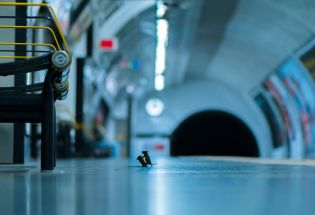 野生动物摄影大赛:地铁老鼠为食而战 斩获人气大奖