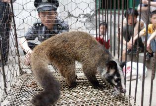 为什么新冠疫情始于中国?