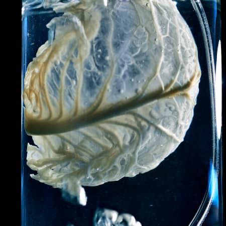 Angela Mathis | Ectosymbiont