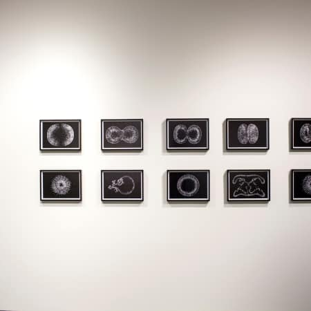 Image of work on display at the Lens on Life exhibition