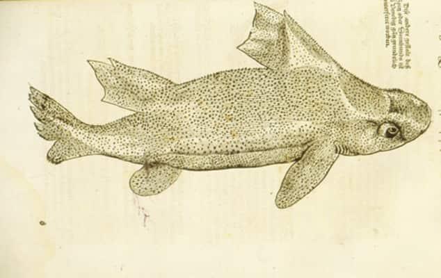 Conradt Gessner, Plate LXXIX, 'Langen Krospelfischschen', from Fischbuch, 1563