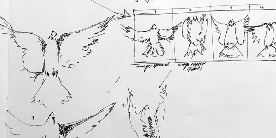drawn birds and animation plans