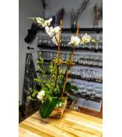Shabby Chic Orchid