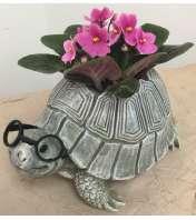 African Violet Turtle Planter