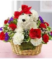 Love Pup
