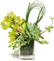 Succulent Orchid Zen Garden Vase™