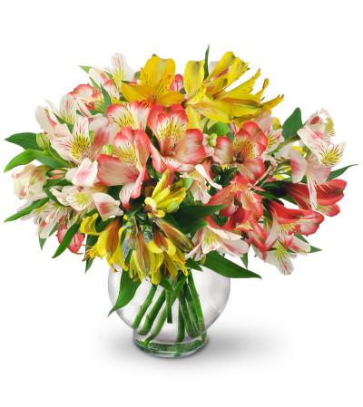 Perfect Peruvian Lilies