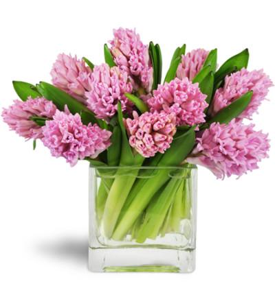 Sweet Pink Hyacinth™