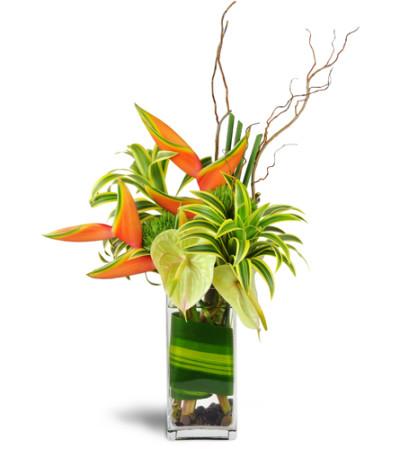 Tropical Enchantment™