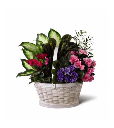 The FTD® Peaceful Garden™ Planter