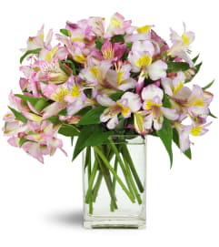 Lively Lilies™