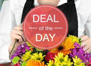 Deal of the day image for mobile