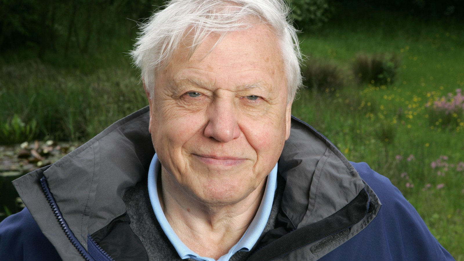 Attenborough On Elephants Sir David Attenborough