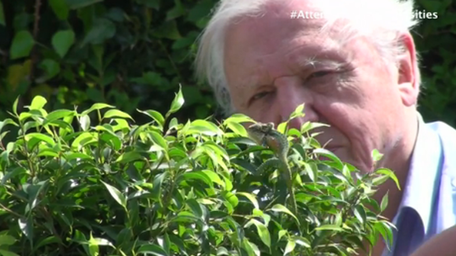 David Attenborough S Natural Curiosities Stretched To The Limit
