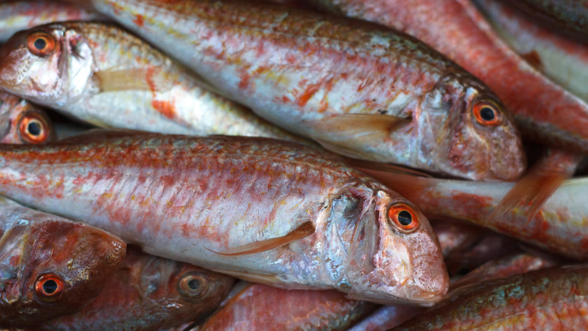 Red mullet ingredients discover good food channel for Red mullet fish