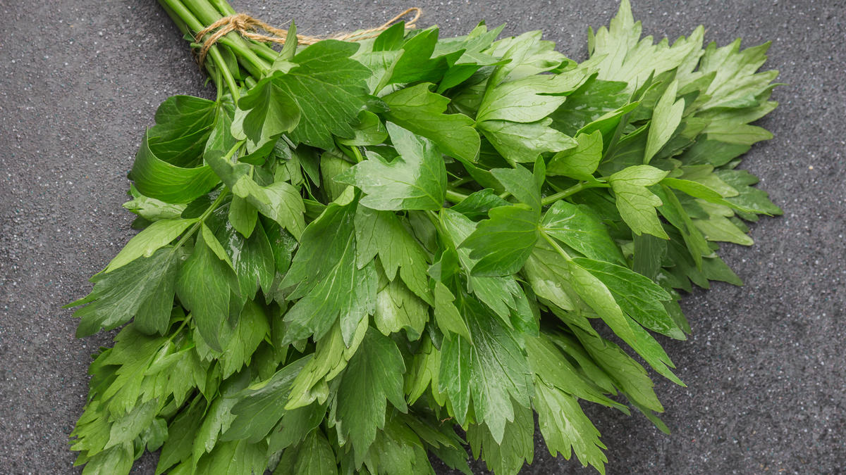 Lovage ingredients discover good food channel - Tips planting herbs lovage parsley dill ...