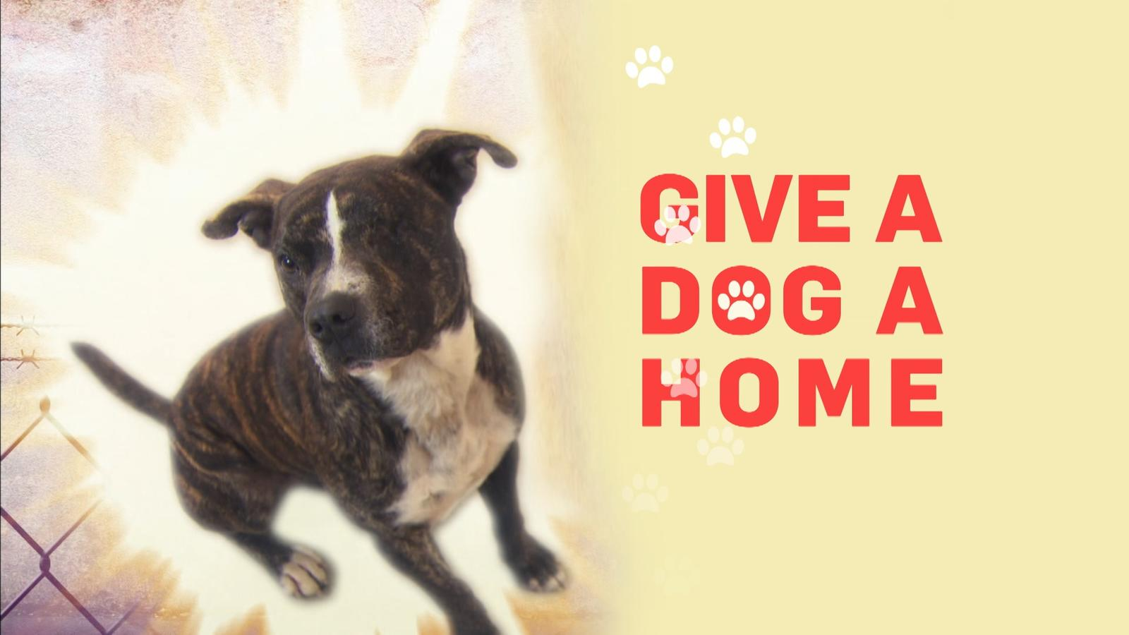 watch give a dog a home online