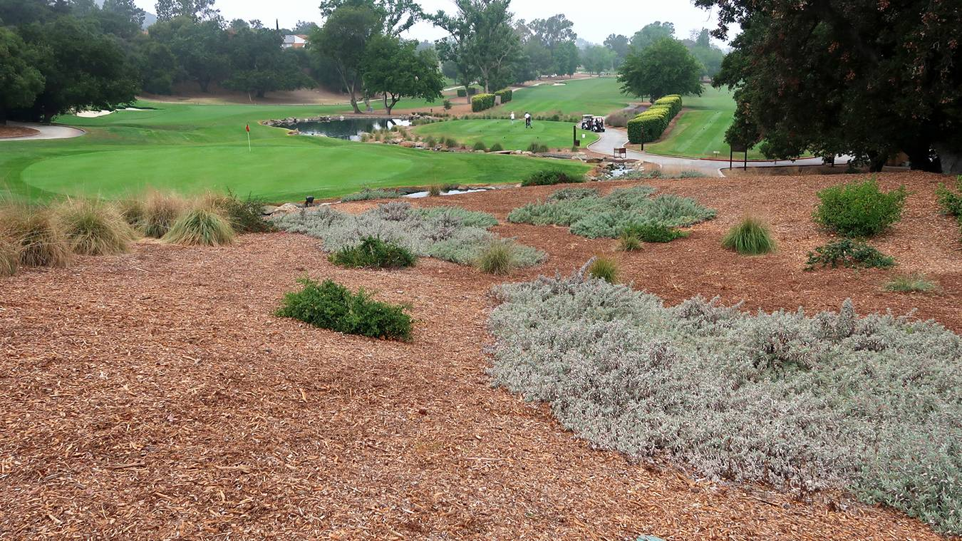 Lessons Learned From Turf Reduction Projects