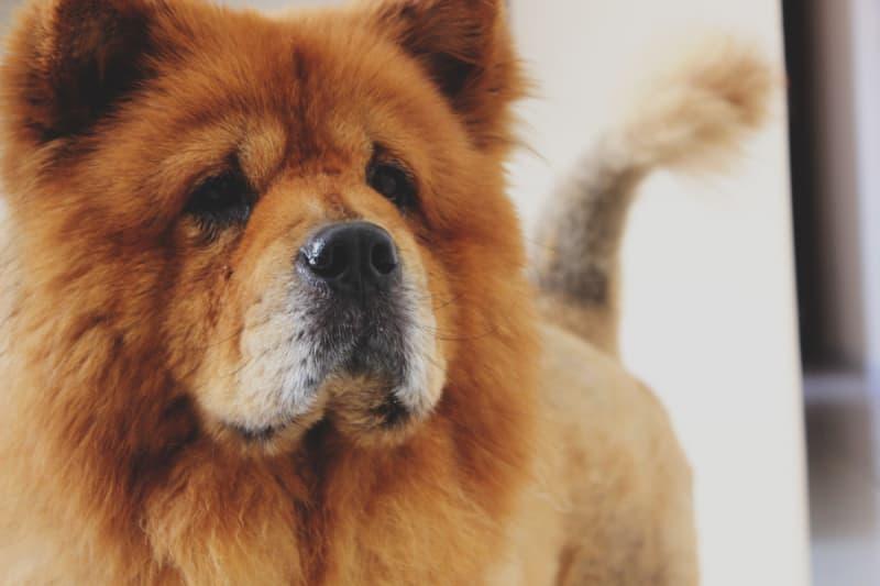Does Renters Insurance Cover Dog Bites? - ValuePenguin