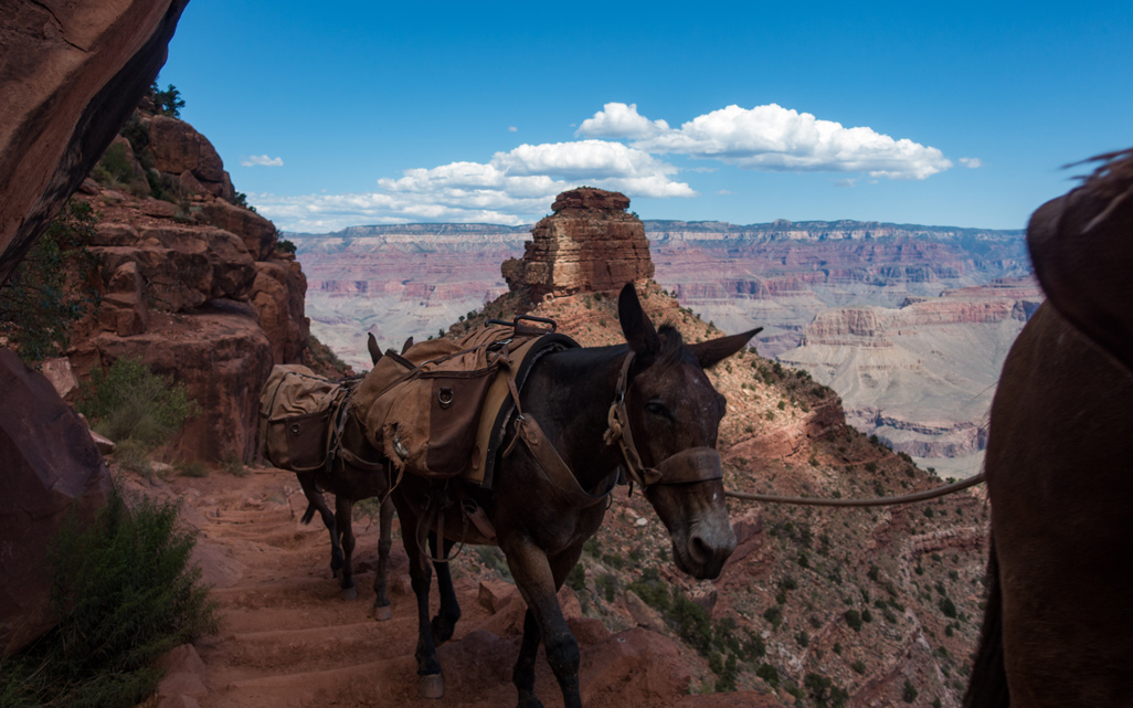 Grand Canyon: Day 1