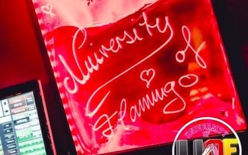 University of Flamingo im Flamingo Royal