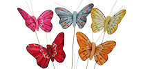 Butterflies sale