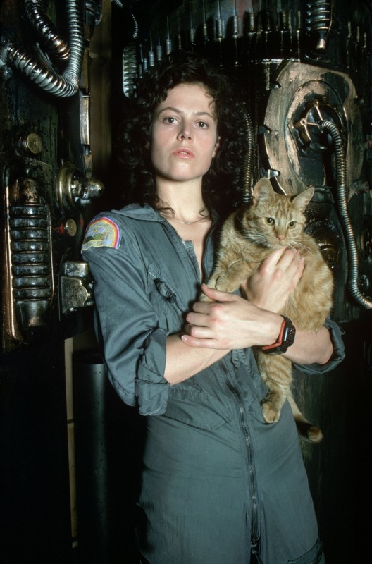 Ripley and the cat