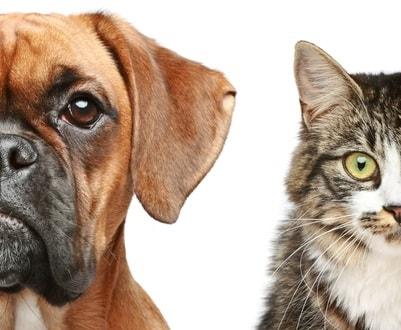 动物种类分多少种
