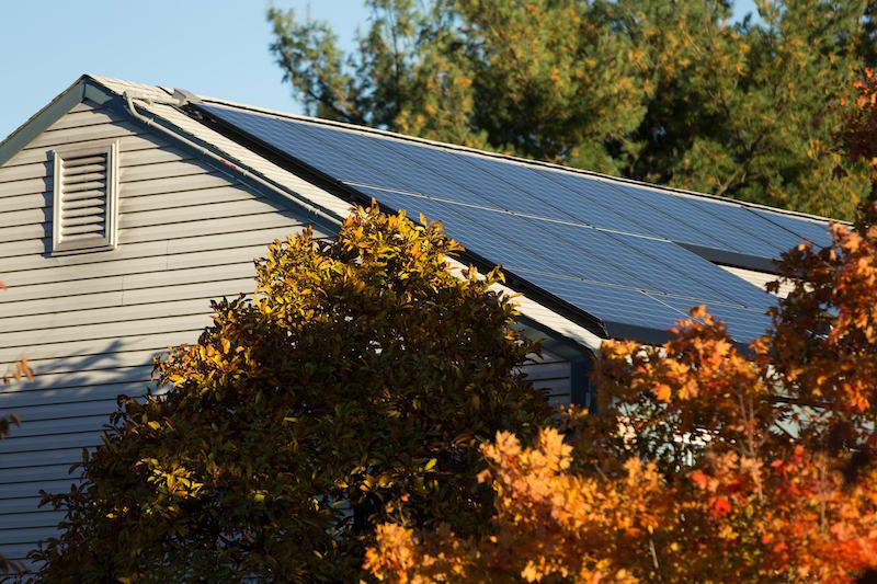 solar panels collect sunlight