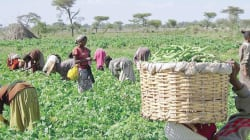 ActionAid calls for improved investment in agriculture