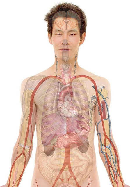 Raio X orgãos internos barriga e peito.